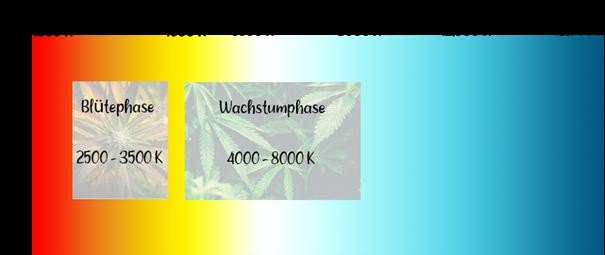 Farbspektrum der Cannabis-Beleuchtung für die einzelnen Wachstumsphasen