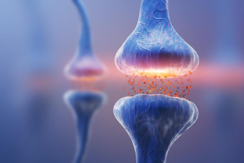 Wie Sucht im Gehirn entsteht - Rezeptoren zur Aufnahme von Cannabinoiden
